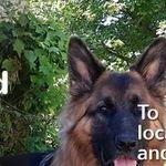Barking Mad Ltd profile image.