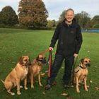 Dan's Dogs