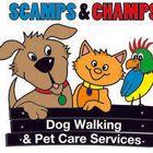 Scamps & Champs Derby Ltd logo