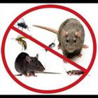 GD Pest & Wildlife Control