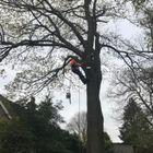 Thistle Tree care ltd