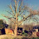 Arborline Tree Care
