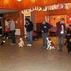 Taking The Lead Dog Training & Behaviour logo
