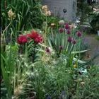 Lisa's Plantastic Gardening