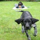 My Happy Dog Ltd