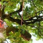 Bobcat Tree Service