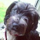 Dependable Dog Care of Shrewsbury