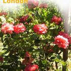 Gardening Service London
