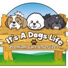 Its a Dogs Life Leicestershire