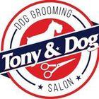 Tony & Dog Ltd.