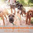 Kensington Hounds