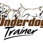 The Underdog Trainer