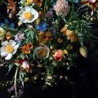 Serendipity Botanist Ltd.