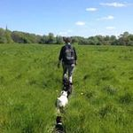 Adventure Walkies Bolton profile image.