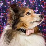 Alex Staniloff Photography profile image.