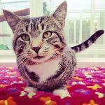 Anastasia's Cat Hotel profile image.