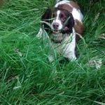 Biggles fun on the run profile image.