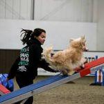 BlackCat Dog Training profile image.