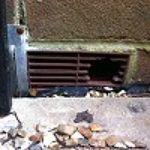 Blue Light Pest Control profile image.