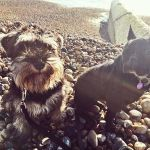 Brighton Pups profile image.