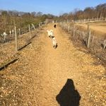 Canine Connections Hertfordshire profile image.