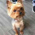 Charnwood Dog Grooming profile image.