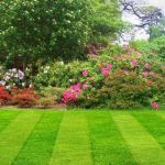 Cheap Gardening Services profile image.