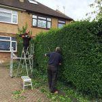 Chipmunk gardening & tree service profile image.