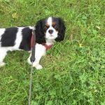 City Dog Walking profile image.