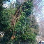 Combined Tree Services Ltd. profile image.