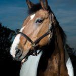 Craig MacNeillie Photography profile image.