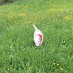Daisy's Wagging Watchers  profile image.