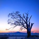 David Vallis Photography profile image.