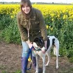 Dog Tired Dog Training profile image.