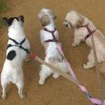 Dogs go walkabout profile image.