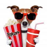 DOGZI K9 BEAUTY AND DOG GROOMING SALON profile image.