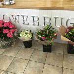 Flowerbug Floral Design  profile image.