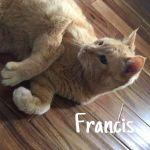 Flyin' Fur Pet Sitting profile image.