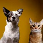 Furtographs Pet Portraiture profile image.