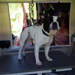 Sarah Gerrard Mobile Dog Grooming  profile image.