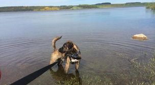Photo by Go For Walkies - South Shields Dog Walker