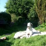Hounds on Holiday. Day and Boarding Care at home or away. profile image.