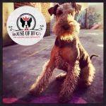 House of Hugo profile image.
