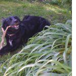 All Four Paws Dog Training, Behaviour & Rehabilitation profile image.