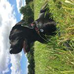 Jurassic Bark Harrogate profile image.