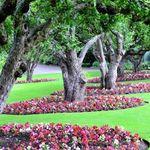 KW Plant Nurseries profile image.
