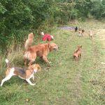 Leeds Leads Pet Care profile image.