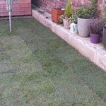 The Gardener profile image.