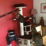 Liza's Pet Care profile image.