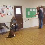 Miyagis Dog Training and Behaviourist Services profile image.
